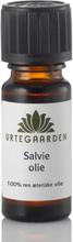 Salvieolie æterisk olie 10 ml.
