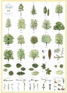 Poster Svenska Träd