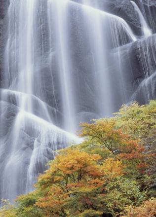 Japanese Waterfall in Autumn Dress Tapetit / tapetti 100 x 100 cm