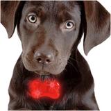 Ledljus för hundhalsband