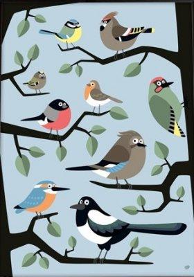 Poster fågelskådning