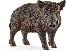 Wild life Wild boar