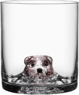 Kosta Boda New Friends Glass Bear 46 cl