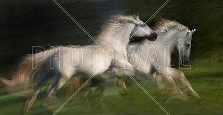 White Horses Gallop Tapetit / tapetti 100 x 100 cm
