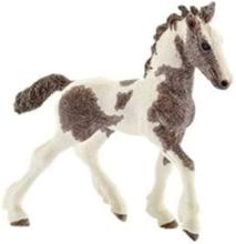 Bondegårdsdyr Tinker foal