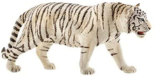Wild life Tiger. white