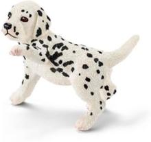 Bondegårdsdyr Dalmatian puppy