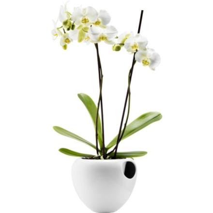 Eva Solo selvvannende orkidepotte 17cm