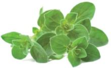Smart Garden Refill 3-pack - Oregano