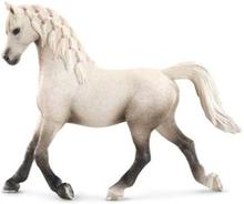 Bondegårdsdyr Arabian mare