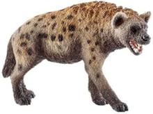 Wild life Hyena
