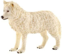 Wild life Arctic wolf