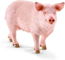 Bondegårdsdyr Pig