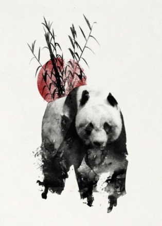 Rising Sun Panda