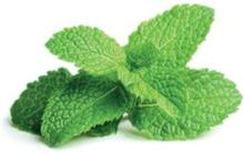 Smart Garden Refill 3-pack - Peppermint