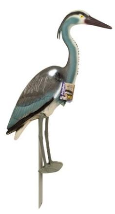 Fågelskrämma: Häger