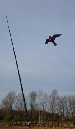 Fågelskrämma: Drake (6 meter)
