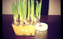 Groene-Green Smoothies