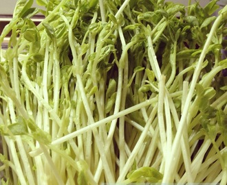 Cooking Pea Sprouts (Wok Recipe)