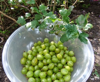 June in the Garden - Gathering Gooseberries and feeding with Nettle Stew