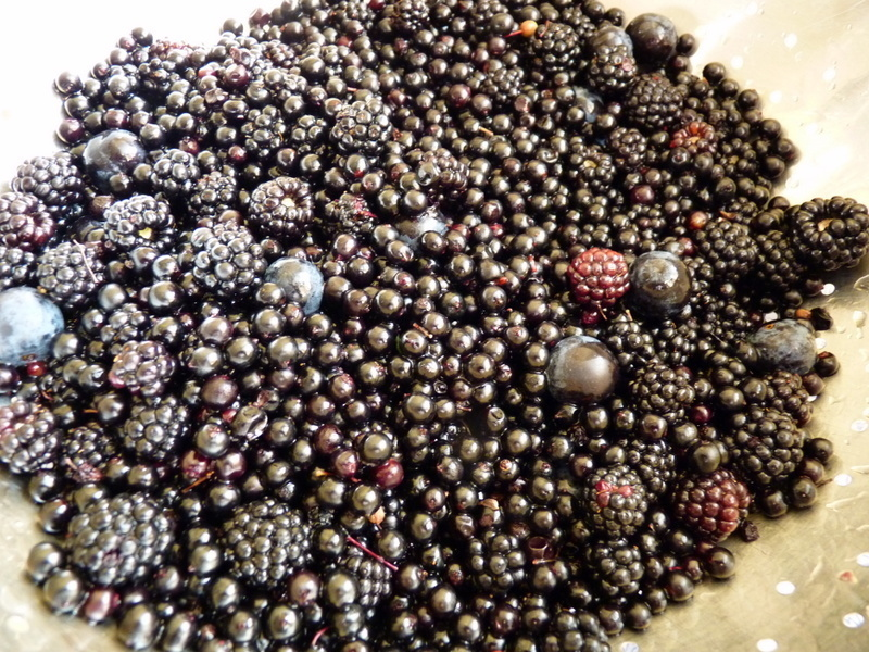 hedgerow foraging