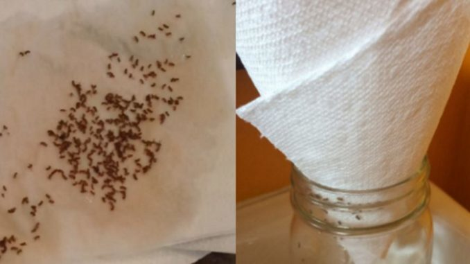 Say Goodbye To Fruit Flies And Gnats For Good – The Paper Towel Trick Changes Everything