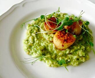 Kampasimpukat ja herkullinen hernerisotto - Scallops and yummy pea risotto