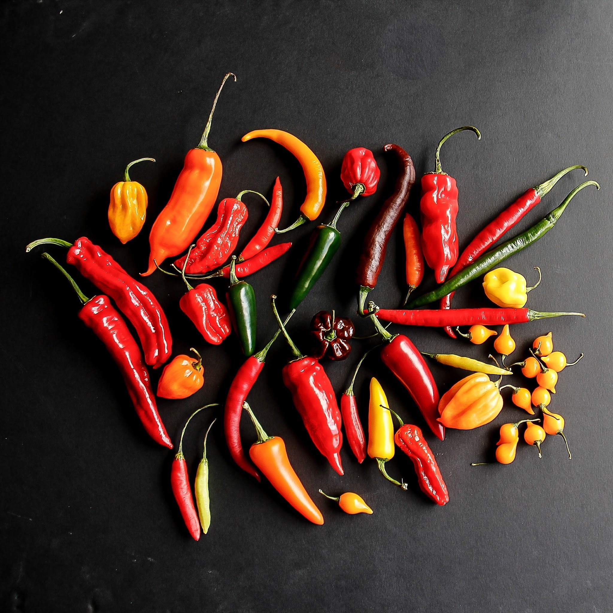 About chilli peppers and Homemade roasted chilli sauce recipe