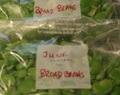 More Recipes for June - Freezing broad beans, Very Simple Strawberry Jam and Broad Bean and strawberry salad