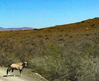 Se7en's Guide to Visiting in the Karoo National Park