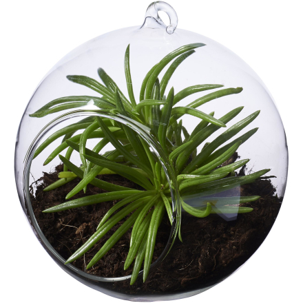 Seasons sfär Terrarium