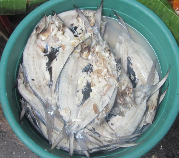 Daing Na Bangus – Milkfish Marinated in Vinegar