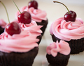 Cherry chocolate cupcakes with Maraschino buttercream