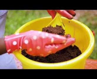 Garden Series - Starting with the right soil