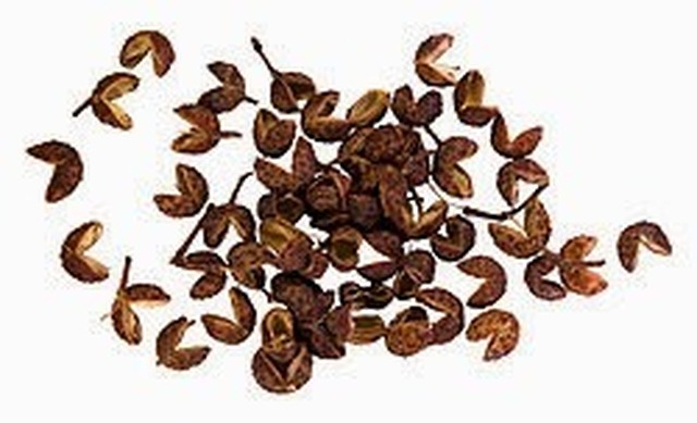 Herb and Spice of the Week - Sichuan Pepper