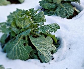 How to Fight Winter Blues with Raw Food