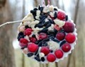 Easy How To: Wild Bird Treats for Winter Energy