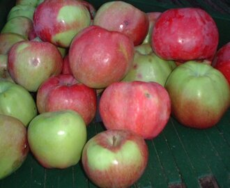 Apple Festival--Sooke