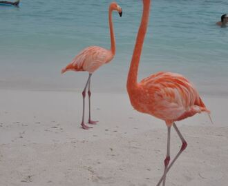 Affordable Aruba: Family Vacation with Credit Card Rewards