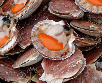 Coquille Saint Pacques