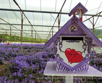 Lavender Farm + Vegetable/Flower Farm + Mushroom Farm @ Gohtong Jaya, Genting Highlands