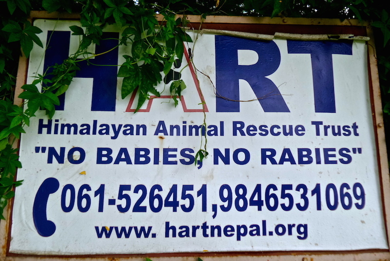 Have a HART: Himalayan Animal Rescue Trust (Part One)