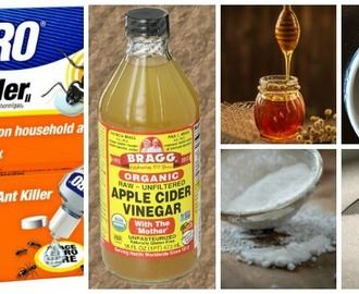Testing 5 Borax Ant Killer Remedies – Which ones Work?