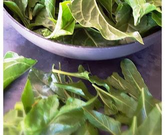 Recettes de comment cuisiner les feuilles de blettes mytaste - Comment cuisiner des blettes fraiches ...