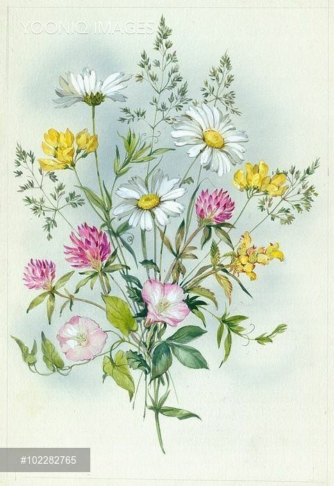 (32) Gallery.ru / Фото #33 - 2 - Fyyfvbwrtdbx1957 | Cards 6 in 2019 | Floral watercolor, Flower embroidery designs, Floral drawing