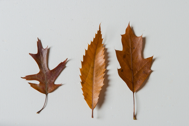 How to Deal with Fallen Leaves – The Green Way