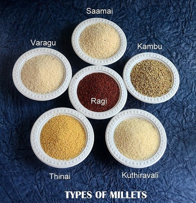 MILLETS–TYPES OF MILLETS,HEALTH BENEFITS,GLOSSARY (KAMBU,THINAI,SAAMAI,VARAGU,KUTHIRAVALI,RAGI)