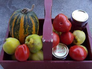 Autumn harvest – and lime cordial