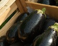 15 Amazing Health Benefits Of Eggplant You May Not Have Heard About
