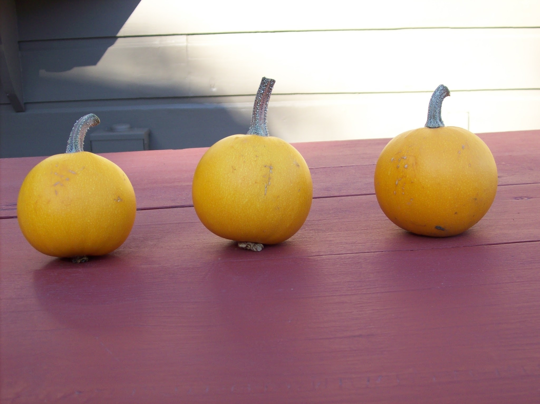 squash week at food fest...want a recipe for pomme d'or squash?